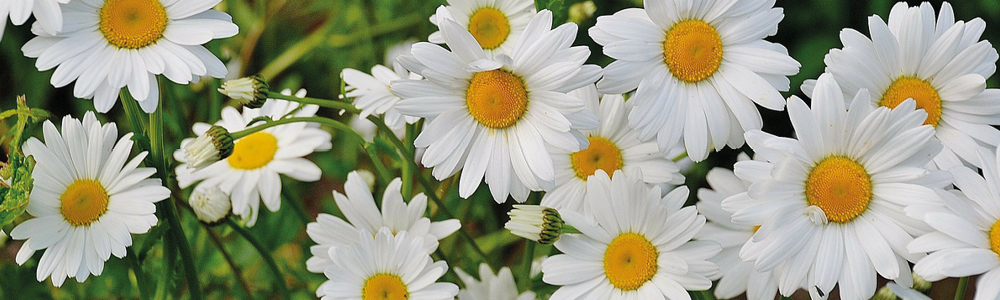 Daisy rings from Lund Copenhagen - several colors and sizes
